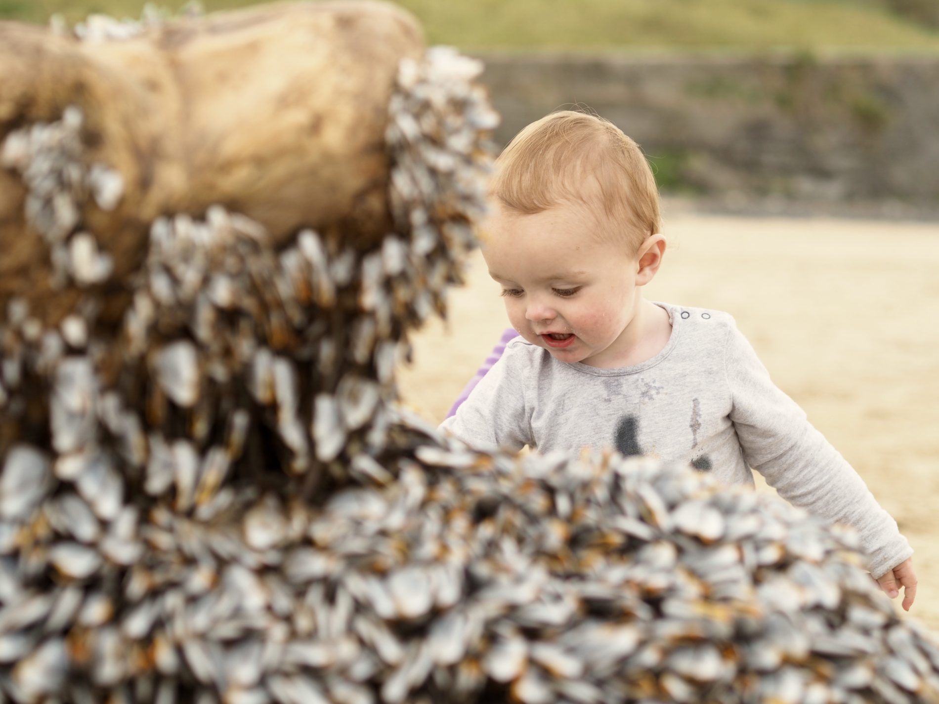 "Hunting barnacles, and the ""monster"" of Burry Port beach"
